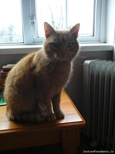 Sat, Sep 13th, 2014 Lost Male Cat - Rossduff, Aughnacliff, Longford
