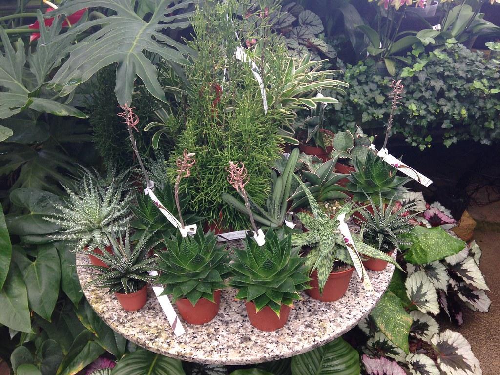Orchidarium de Prangins 18686162193_eb47cbe513_b