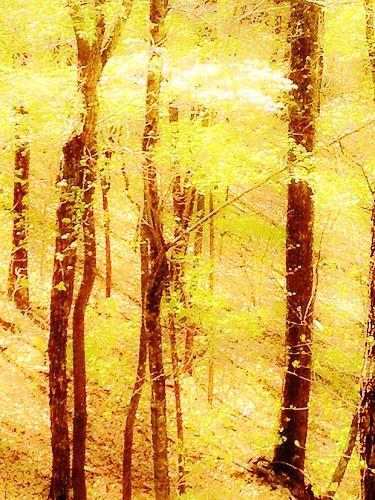 awardtree olingilbert