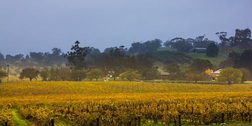 autumn sky fall field rain rural landscape countryside vineyard haze outdoor farm australia serene southaustralia barossavalley splendid drizzle splendour splendor greystump copyrightcolinpilliner