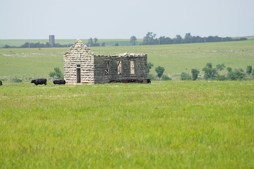 trees scenery cattle kansas fields flinthills abandonedchurch abandonedschool sal55200 sal1855 oldrockbuilding sonyslta33