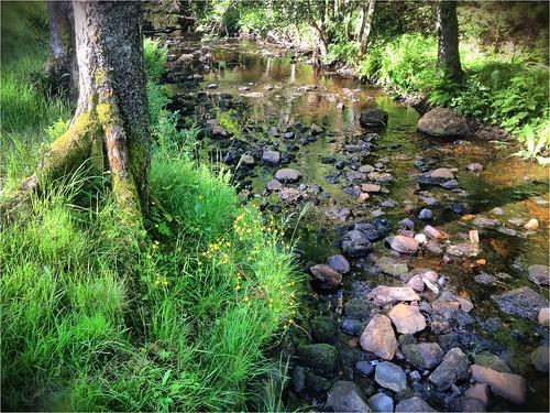 nature creek sweden schweden swedish sverige suede svensk ruotsi suècia sueco suedoise sandared schwedish