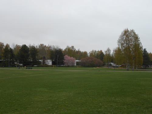 Nurminäkymä, Pohjois-Tapiola Espoo 10.5.2014