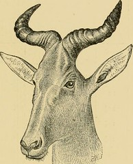 "Image from page 74 of ""Horn measurements and weights of the great game of the world: being a record for the use of sportsmen and naturalists"" (1892)"