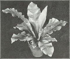 """Image from page 50 of """"Farquhar's autumn catalogue : 1921"""" (1921)"""