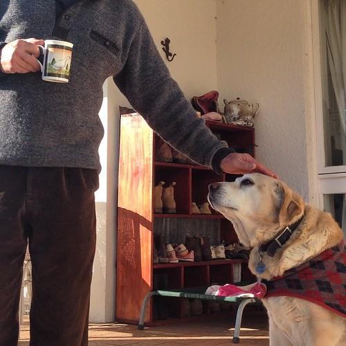 Old dog Daisy #gleneaglescottageandcabin #petfriendlyaccommodation