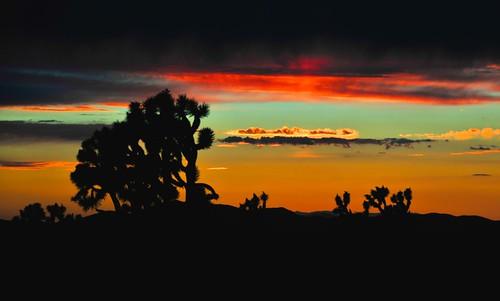 sunset glow desert joshua joshuatree desertsunset deserttree nikond300