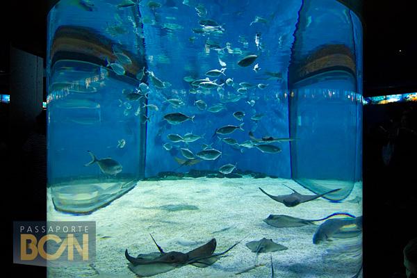 acuario, Barcelona