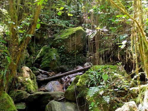 forestsandjungles