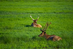 North American Wildlife 71