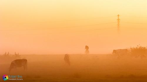 orange sun mist yellow misty sunrise landscape landscapes foggy rays fo photographicmoments onlanden