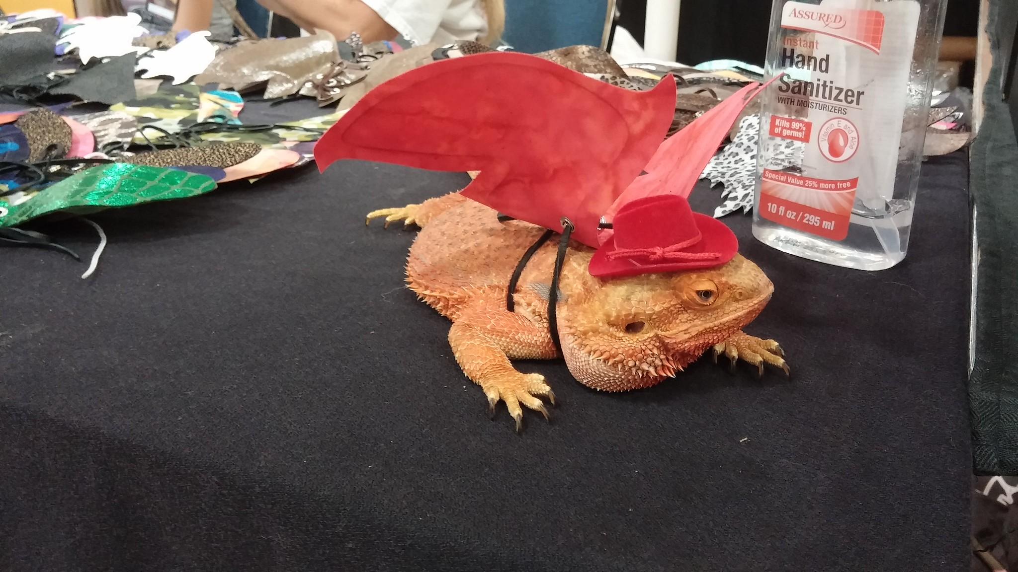 Reptile Store Bay Area