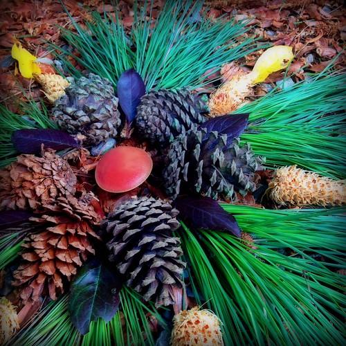 Pine Switch Mandala/3