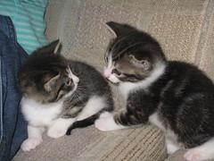 Shimmer's kittens