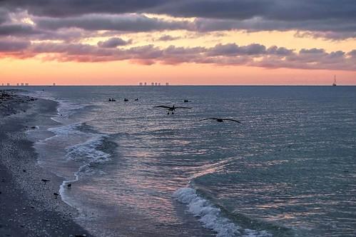 pelicans skyline sunrise island florida fl sanibel sanibelisland gulfcoast fortmyers barrierisland floridagulfcoast