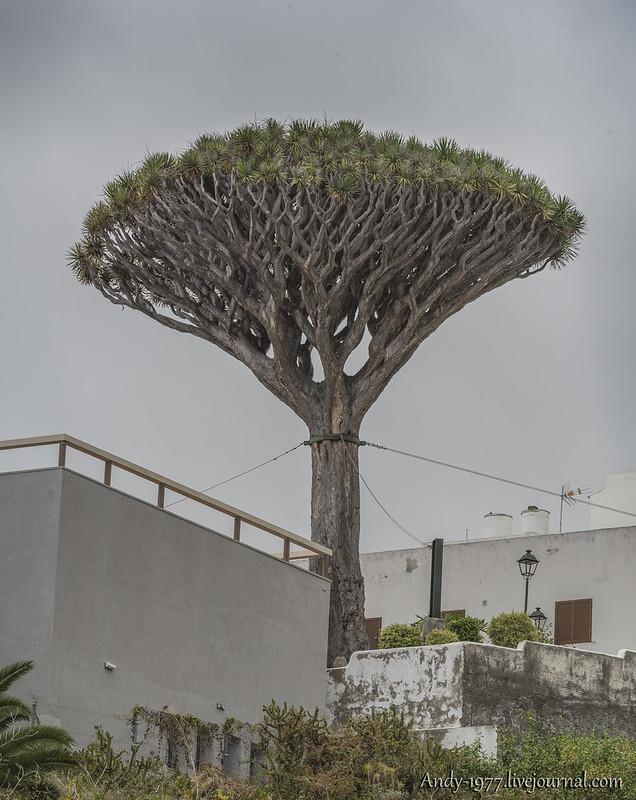 20140702_Tenerife_0015