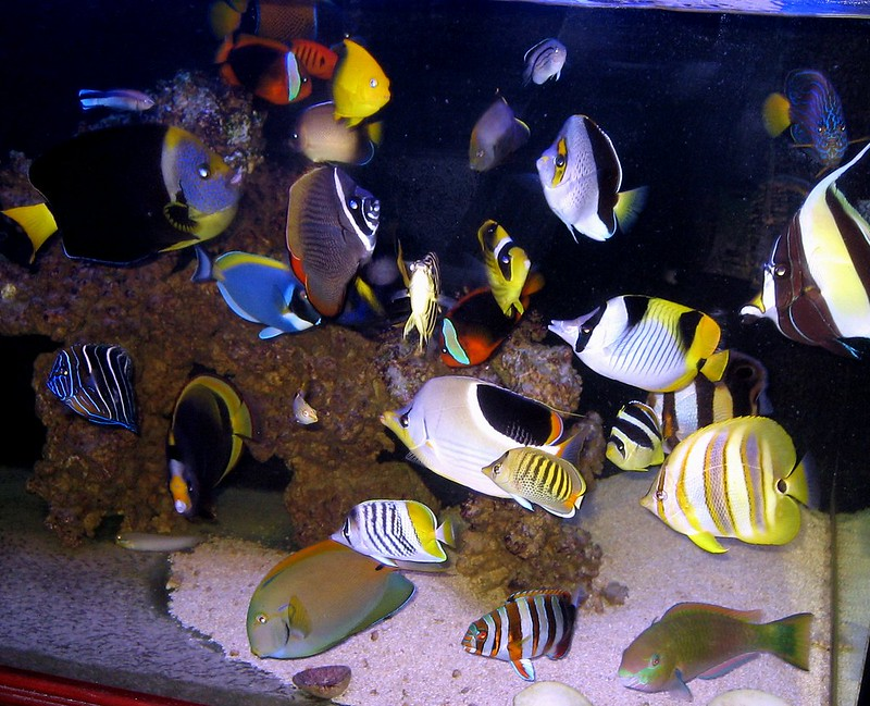 My 240g Fowlr Page 26 Reef Central Online Community