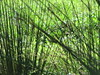 incroci d'erba