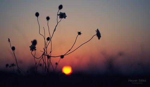 light sunset summer nature field grass night flover