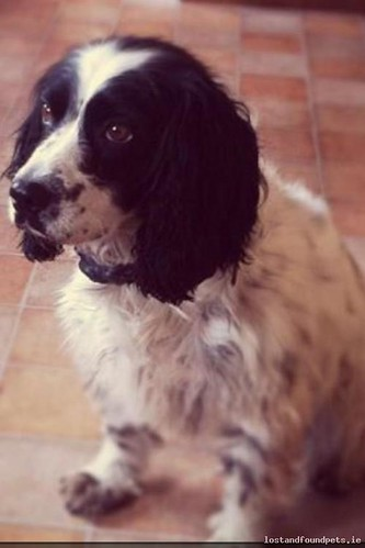 [Reunited Via Other Site] Sat, Sep 27th, 2014 Lost Male Dog - The Local Area, Abbeyleix, Laois