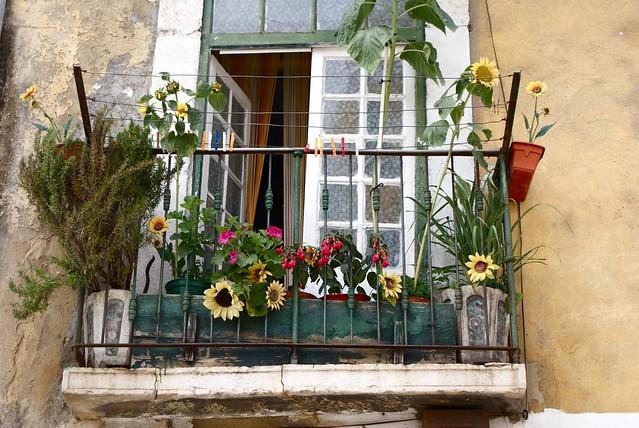 Appartement fleuri à Lisbonne, pas dit qu'il soit en location cela dit.
