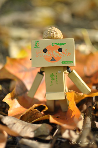 Autumn walk Danbo