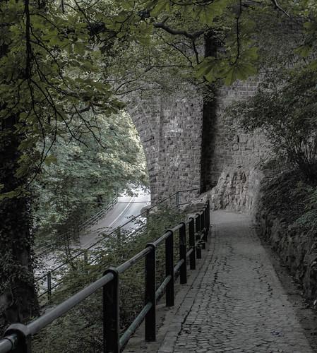 wood tree wall stones steine árbol luxembourg wald arbre baum luxemburg лес дерево drzewo камни стены зелень ხე raymondzoller