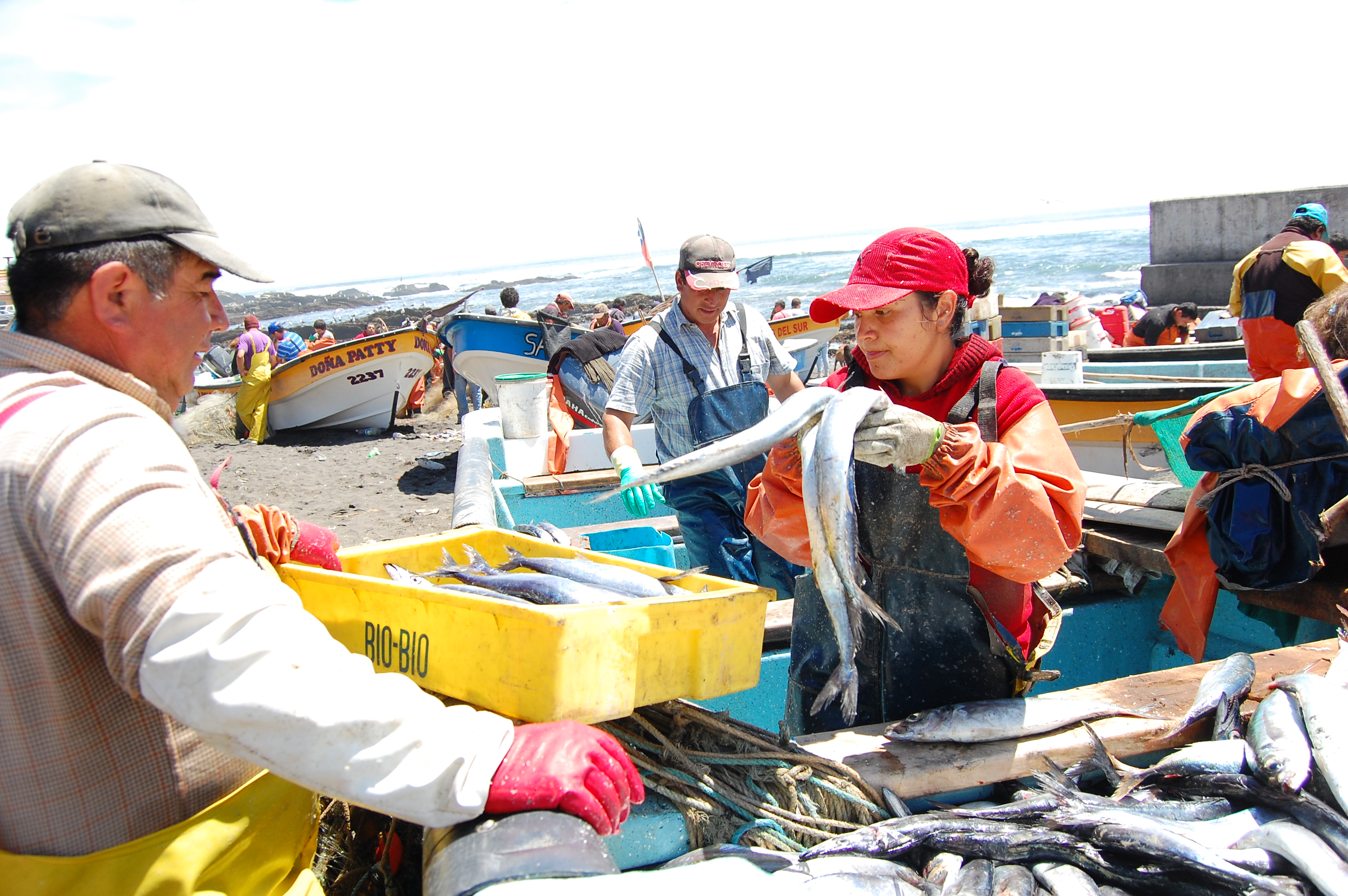 Industrial fisheries crowd out artisanal fisherpersons in for Fisher fish chicken indianapolis in