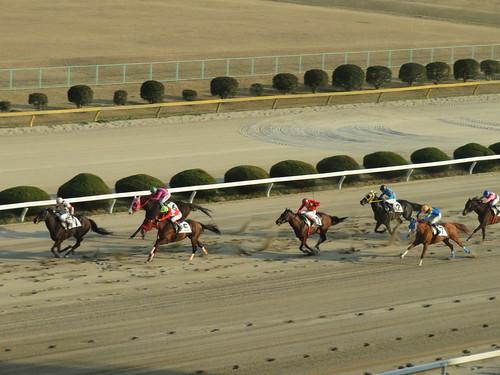 佐賀競馬場の3階から見たレース風景