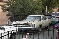 Amazing derelict cars