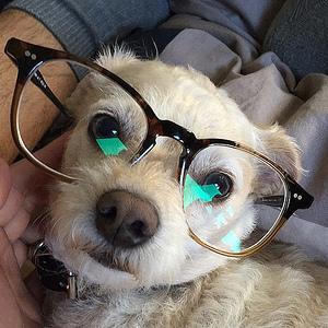 Gadget Dog