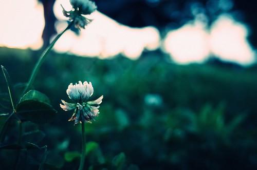 グラウンドの片隅に咲く
