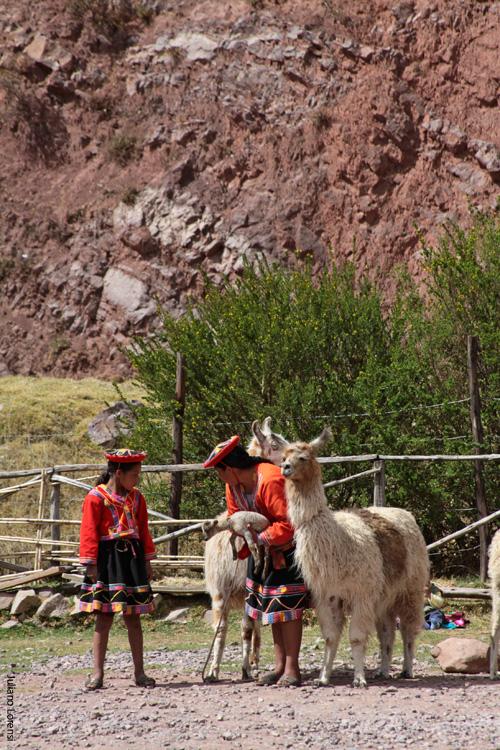 Lhamas e trajes típicos do Peru