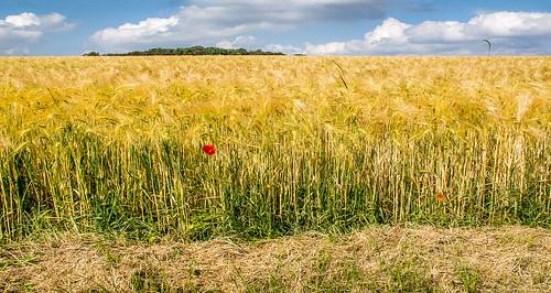 field luxemburg