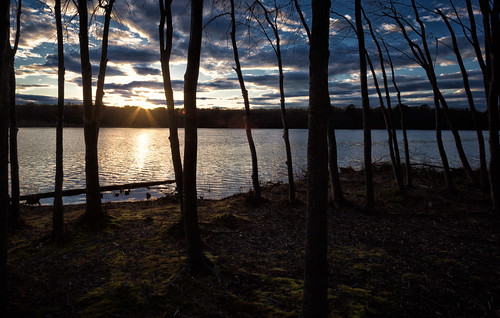 trees sunset sky nature water landscape moss newjersey unitedstates nj helmetta helmettapond lakemarguerite