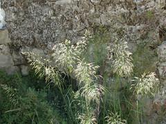 Το Κάστρο της Ψίνθου (01/06/2014)