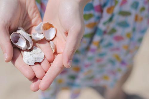 seashells, heart hands, shells in hand, heart shaped shells