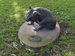 Wombat Scratching Itself