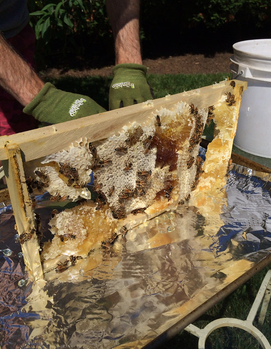 Ordinaire Jill Wrote A Guest Post For Us About Their First Bonus Harvest, Describing  Each Step. At The End, She Said That They Were Told To Leave The Bees U201cat  Peaceu201d ...