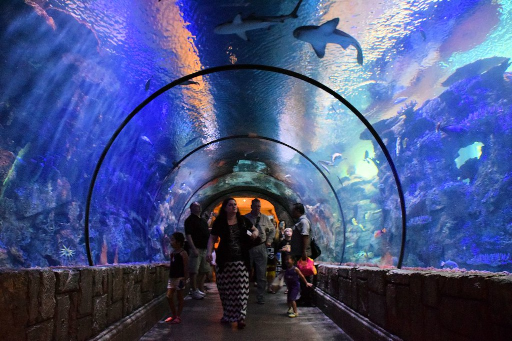 Mandalay Bay Shark Reef Aquarium