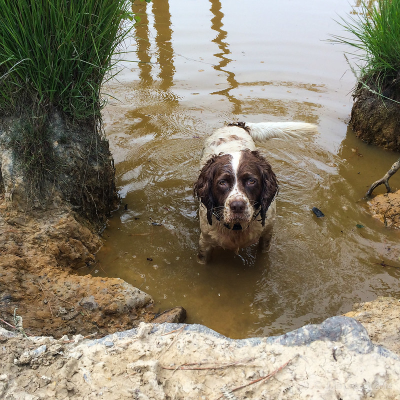 Max in the deep pond