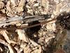 Plate-forme sommitale du piton rocheux : câbles métalliques et trous de pylônes (?)