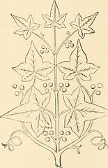 """Image from page 525 of """"Revue de l'art chrétien"""" (1857)"""