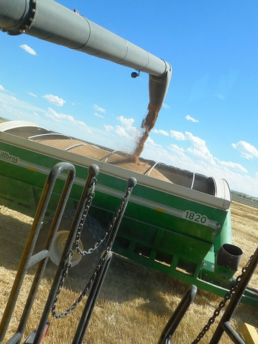 Topping off the grain cart