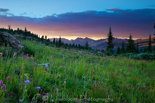sunset mountains colorado wildflowers shrinepass