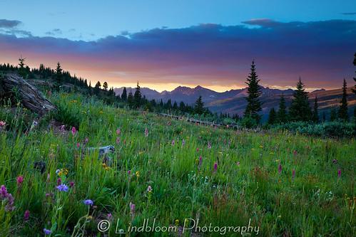 sunset mountains colorado wildflowers shrinepass