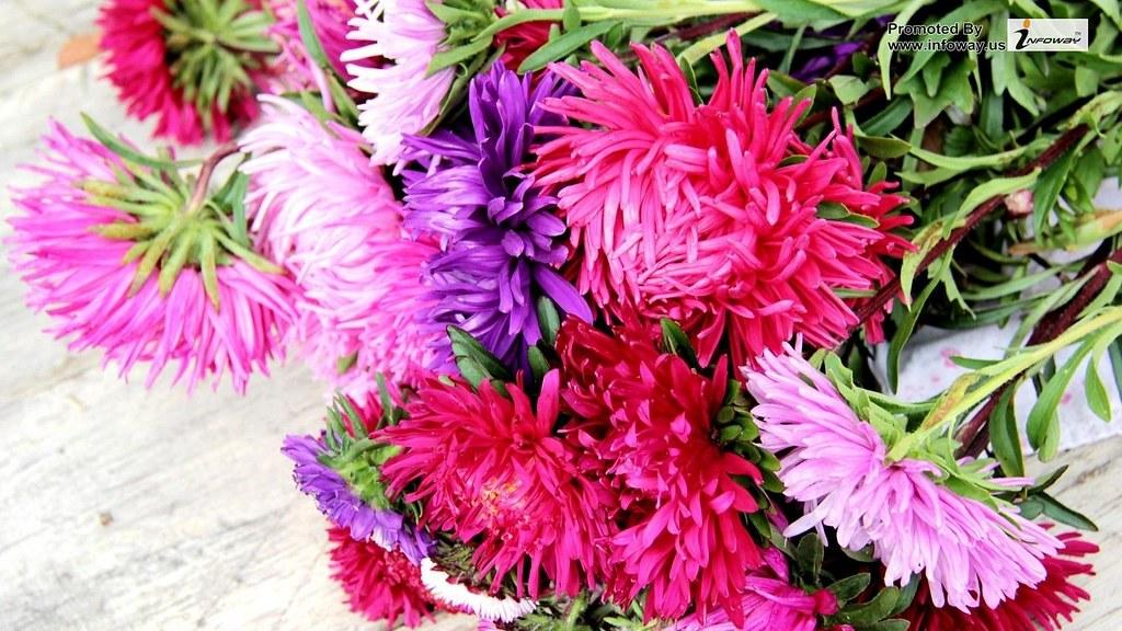 Aster Flowers Bouquet Colorful Lie