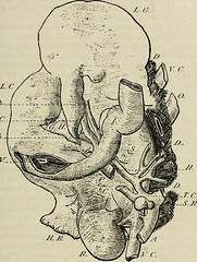 """Image from page 258 of """"Bulletin du Muséum national d'histoire naturelle"""" (1895)"""