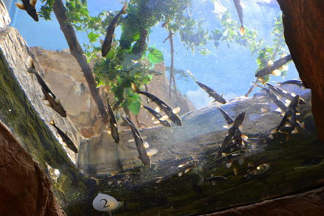Eisley's 6th Birthday at Downtown Aquarium