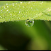 Small photo of Dew Drop in the morning